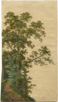 Unbekannter deutscher Künstler des 19. Jahrhunderts, Baumstudie