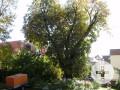 2 Rote Kastanien an der Silberburgstraße