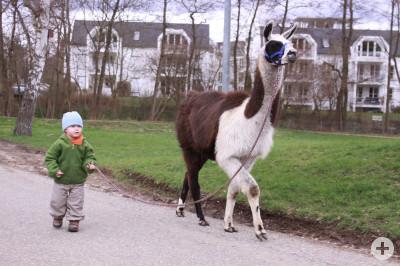 Lasse mit Lama Felix auf Tierspaziergang