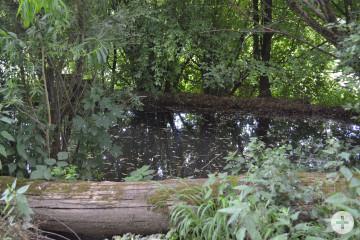 Brunnen Neckarhalde Tümpel