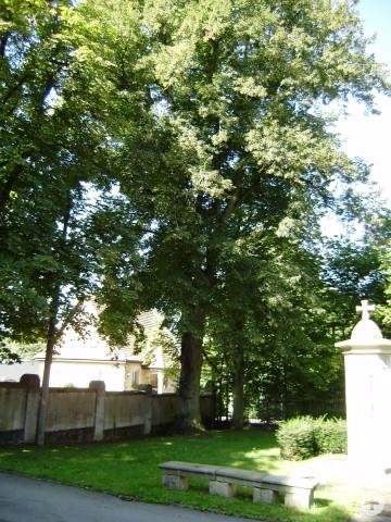 Friedhofslinde am Friedhof