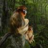 Das goldene Paar © Marsel van Oosten - Wildlife Photographer of the Year