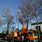 Baumpflegearbeiten