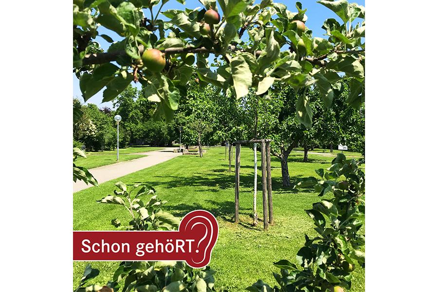 Apfelbaum in der Pomologie und im Hintergrund Wiese und weitere Bäume