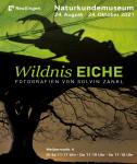 Plakat der Ausstellung Wildnis Eiche. Zu sehen ist ein Schatten eines Hirschkäfers auf einem Blatt und eine Eiche im Abendrot.