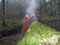 Holzaufarbeitung im Stadtwald (Foto: B. Schölkopf)