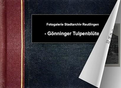 Gönninger Tulpenblüte - Bitte klicken, um das Album zu öffnen