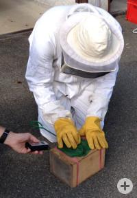 Arbeiterin für Arbeiterin wird behutsam in die Kiste bugsiert