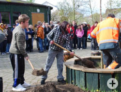 Zwei Kinder der Morgensternschule schaufeln Erde in ein Holzrundel um einen eingepflanzten Baum zu bedecken. Ein Mitarbeiter der Stadt steht im Rundel und stampft die Erde mit den Füßen fest