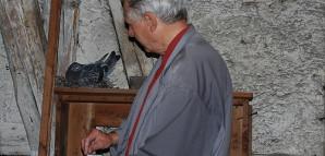 Taubenwart Wolfgang Wießner füttert die brütende Taube.