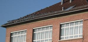Taubenschwarm auf einem Dach gegenüber dem Taubenschlag am ZOB.